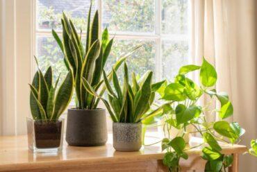 Beneficios de decorar con plantas para la salud